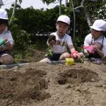 梨花幼稚園で農業体験