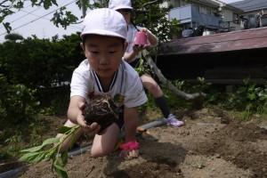 梨花幼稚園の食育3