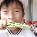 梨花幼稚園で農業体験4