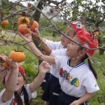 梨花幼稚園で柿
