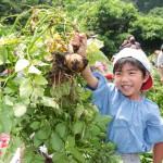 梨花幼稚園で農業体験3