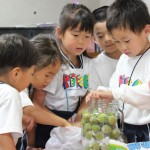梨花幼稚園で梅干し